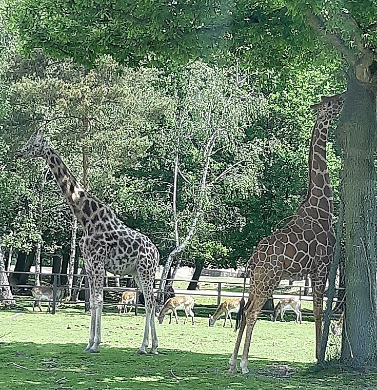 Thoiry #zoo in France and what does it feels to live next door to a single mom?