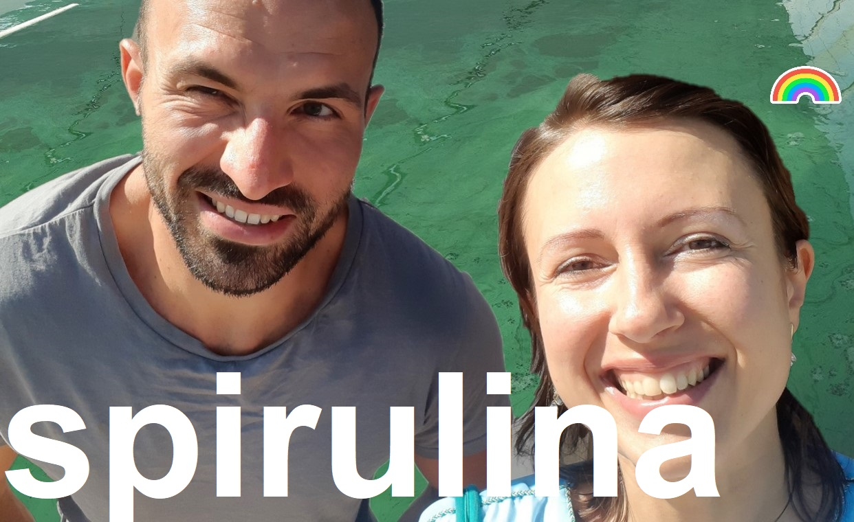 Why is #spirulina so good for us or visit of a spirulina farm