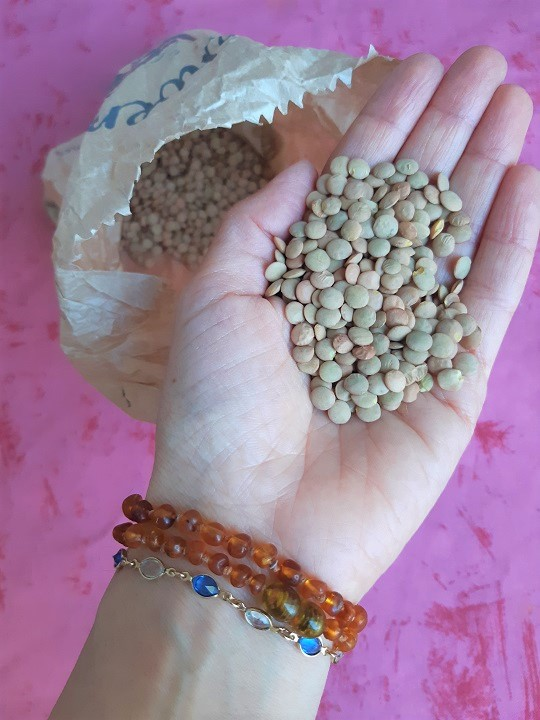 How to sprout lentils in only 4 days